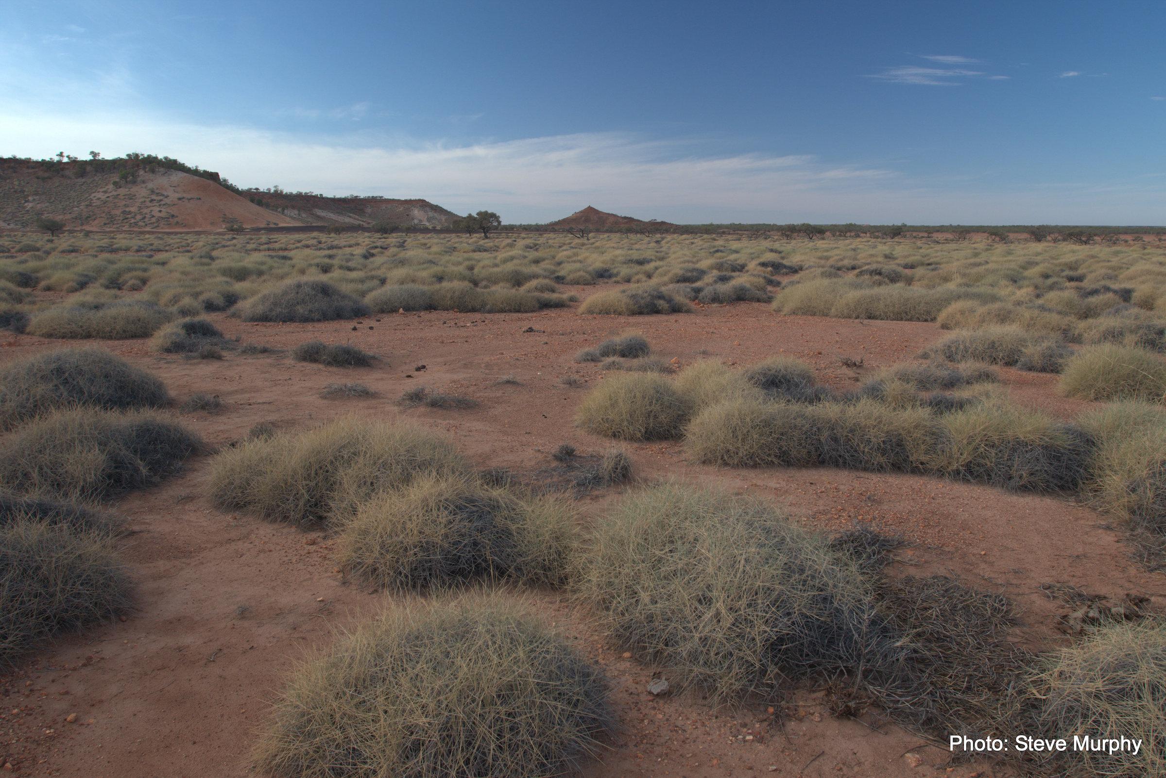Triodia longiceps habitat